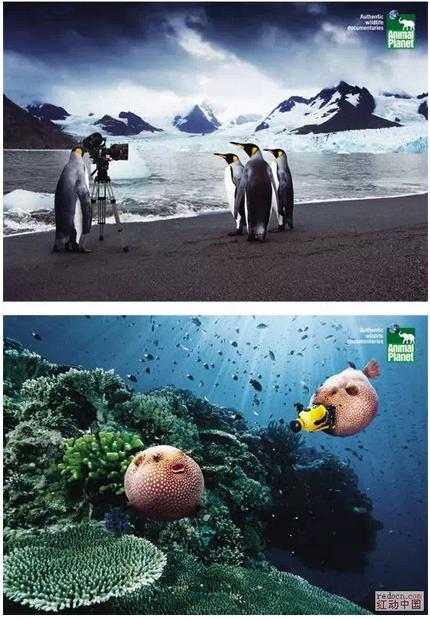 planet(动物星球)系列广告