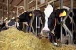 2016养殖集团原奶产量Top15:产量占全国17%