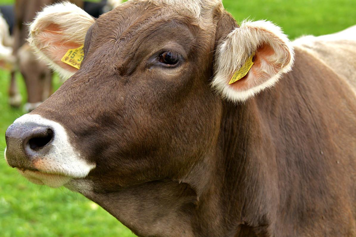 国美入局农业 欲推区域公用品牌
