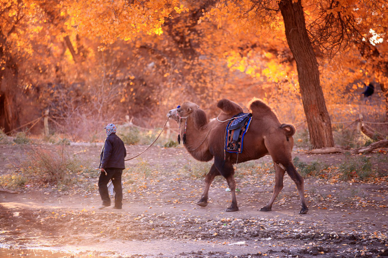 行業報告:新疆網商活躍性整體呈下降趨勢